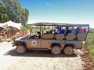 Südafrika | Kapstadt, Jeep der Safari im Inverdoorn Game Reserve