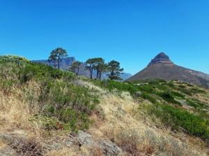 Südafrika | Kapstadt, Blick auf den spitzen Berg Lions Head vom Signal Hill bei blauem Himmel