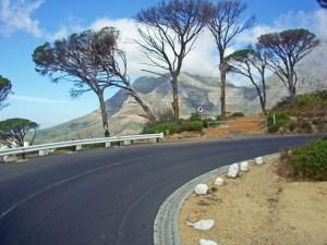 Südafrika | Der Weg Richtung Tafelberg in Kapstadt. Panorama auf Pinienbäum, die Straße und eine Bergkette