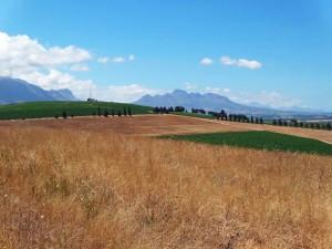 Südafrika | Kapstadt, Idylle pur Weinregion Stellenbosch. Felder, Bergketten, blauer Himmel