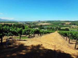 Südafrika | Kapstadt, Weinregion Stellenbosch Panorama auf einer Wanderung durch das Weinanbau-Gebiet auf Reben, Felder und kleine Häuser bei blauem Himmel