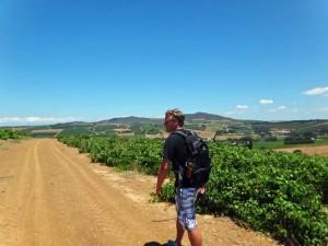 Südafrika | Kapstadt, Wanderung in der Weinregion Stellenbosch. Henning auf dem Weg durch idyllische Felder bei blauem Himmel
