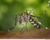 Dengue, Malaria, Zika & Co., Mückenschutz gegen die Tigermücke