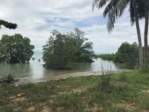 Thailand |Koh Phangan, Mangroven am Ao Wok Tum Strand. Große Mangroven-Bäume im Wasser