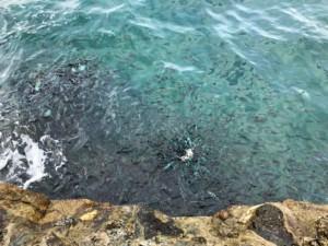 Thailand |Koh Phangan, bunte Fische beobachten, direkt im Koh Raham Restaurant am Secret Beach. Im blauen klaren Meer schwimmen hunderte bunte Fische