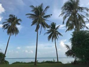 Thailand |Koh Phangan, Palmen am Strand sind keine Seltenheit, hier am Ao Bang Charu. Palmen vor dem Meer, bei blauem Himmel und Sonnenschein