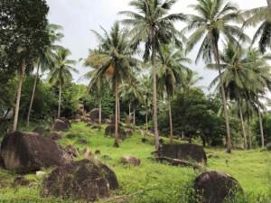 Thailand |Koh Phangan, Palmen und Vulkansteine im Inselinneren