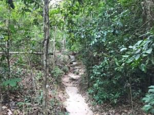 Thailand |Koh Phangan, Weg durch den Dschungel zum Than Sadet Wasserfall. Blick auf den Trail durch den grünen Urwald