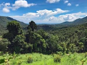 Thailand |Koh Samui, Shortcut nach Maenam mit dem Meer im Hintergrund. Grüner Urwald, Palmen, blauer Himmel