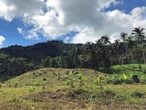 Thailand |Koh Samui, Panorama beim Überqueren des Inlands auf dem Shortcut nach Maenam. Blick auf den Urwald mit Palmen bei blauem Himmel