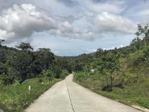 Thailand |Koh Samui, Straße durch den Urwald im Landesinneren auf dem Shortcut nach Maenam, grüne Palmen am Straßenrand