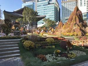 Südkorea | Seoul, Jogyesa Tempel, bunte Blumen im Garten des Tempels mit modernen Hochhäusern im Hintergrund
