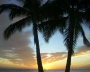 Der perfekte Ort: Maui Hawaii
