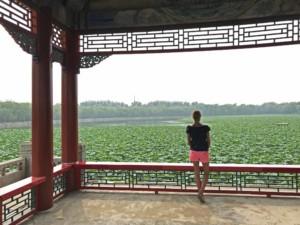 Schatten spendende Pagoden im Neuen Sommerpalast mit Blick auf blühenden Lotus