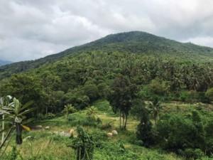 Urwald und Berge in der Mitte der Insel Koh Phangan