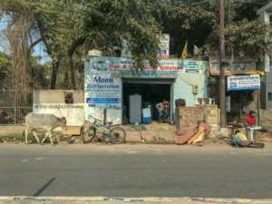 Auf dem Weg vom Bahnhof in die Stadt Agra: Kuh, Inder, Laden