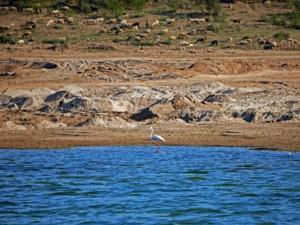 Flamingos und Schafe im Chambal Naturschutzgebiet auf Safari im Boot