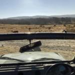 Blick aus Gypsy / Jeep während einer Tiger-Safari im Ranthambore-Nationalpark.