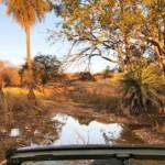 Mit dem Gypsy / Jeep erreicht man in Ranthambore und Sariska auch entlegenere Ecken.