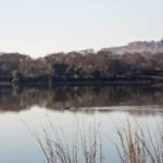 Ein Sumpfkrokodil kreuzt den See.