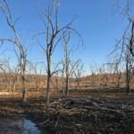 Ranthambore Nationalpark im Winter mit kahlen Bäumen.