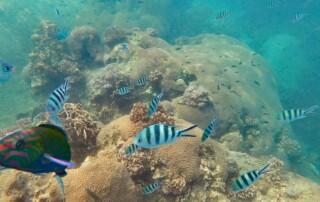 Sehenswürdigkeiten, Strände, Schnorcheln & Tipps: Bunte Fische und Korallen von Koh Tao