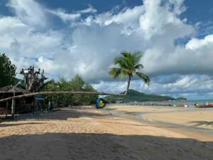 Die berühmte Palme am Sairee Beach mit Blick Richtung Mae Haad