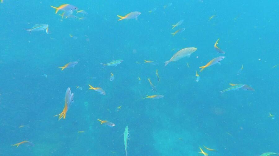 Sehenswürdigkeiten, Strände, Schnorcheln & Tipps: Die Unterwasserwelt von Koh Tao ist sehr vielseitig